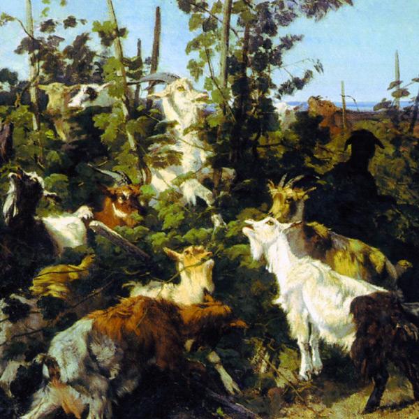 Palizzi - Capre